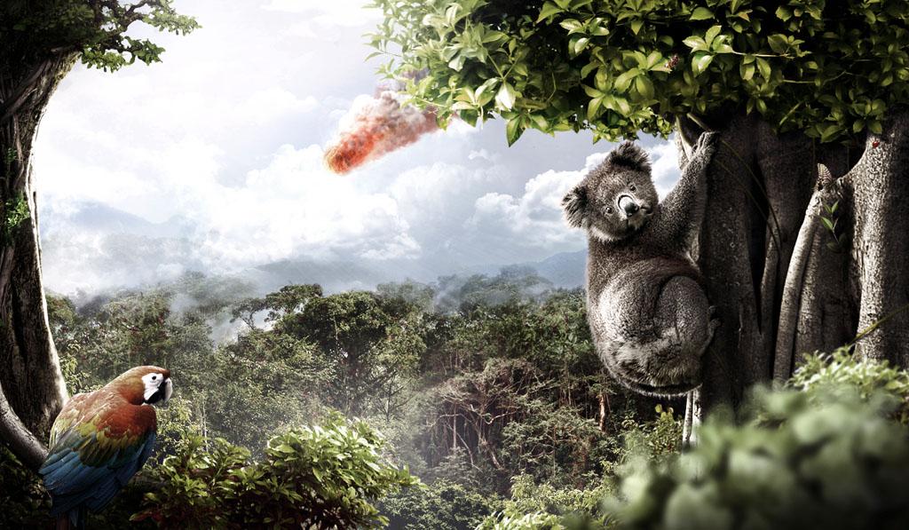 koala_asteroid